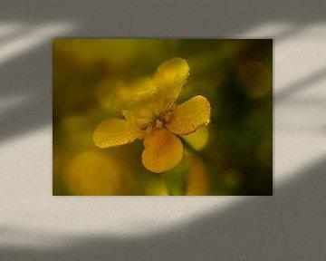 Gelb im Sumpf von peterheinspictures