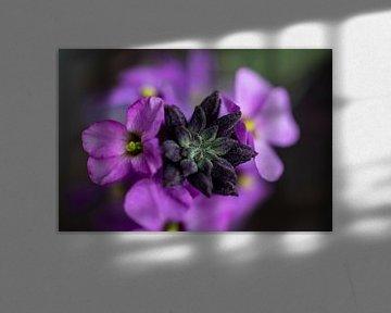 rosa von peterheinspictures