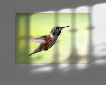 Kolibri von Wim Frank