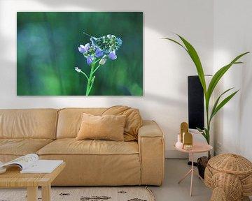 Frühlingsblau von Marjo Snellenburg