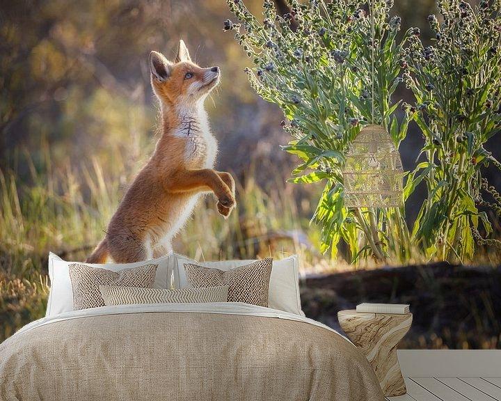 Sfeerimpressie behang: jonge vos van Pim Leijen