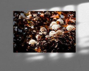 Das Mädesüß von Fleurien