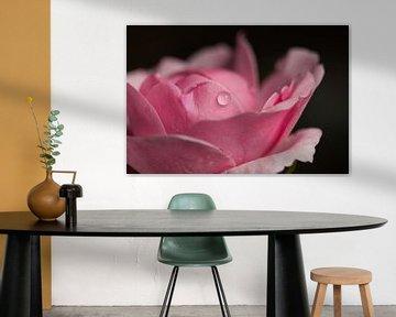 Roze roos van JM de Jong-Jansen