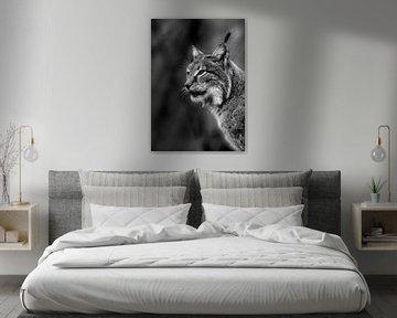 low-key portret van Lynx van Niels Derksen