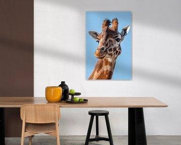 Porträt-Giraffe in Schwarzweiß von Marjolein van Middelkoop