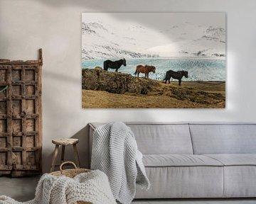 IJslandse paarden (IS)