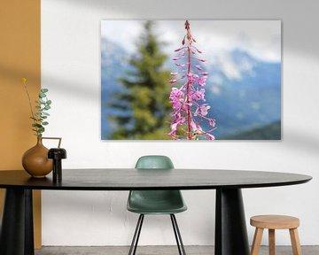 Rohrkolbenblüten Österreich (2) von Danique Prinsen