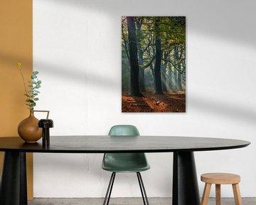 Herfst Bos met zonnestralen van Mart Houtman