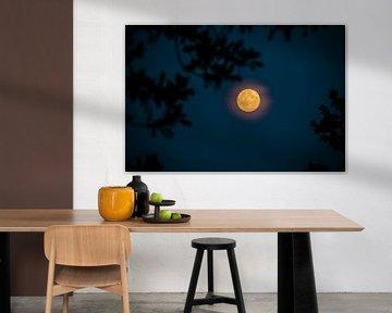 Volle maan van Colin van der Bel