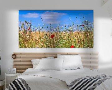 Bord d'un champ de blé avec des coquelicots rouges et des fleurs blanches