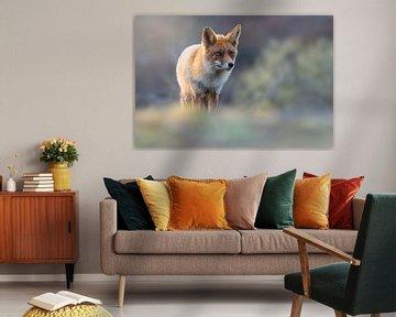 Fuchs im schönen Abendlicht