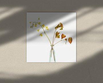 elfenbloem voor witte achtergrond