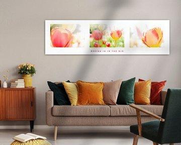 Triptychon mit Tulpen von Eddy Westdijk