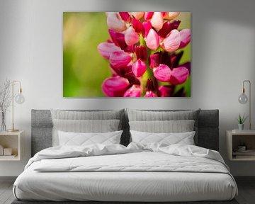 Frühlingsblume von Jeroen Mikkers