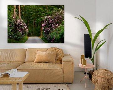 Rhododendron im Runden Haus in Nunspeet von Jenco van Zalk