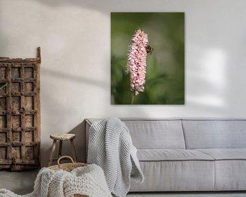 Pastellblume mit Biene von Anke Winters