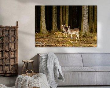 Zwei neugierige Rehe am Waldrand von Denis Feiner