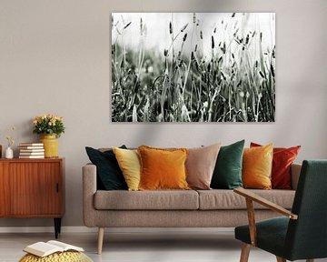 Verschiedene Grassorten in Schwarz und Weiß und viele Grautöne von Studio de Waay