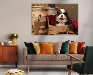 Berner Pup Grace van Bob de Bruin