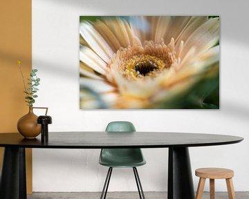 Blüte: Gerbera von Elma Mud