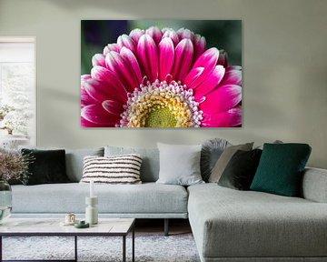 Blume von Elma Mud