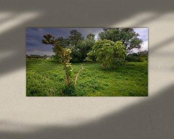 Blühender Maibaum in den Überschwemmungsgebieten von Jenco van Zalk