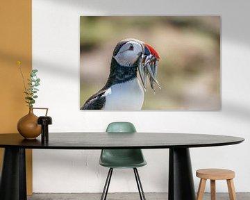 Papegaaiduiker op de Farne Islands van Paul van der Zwan