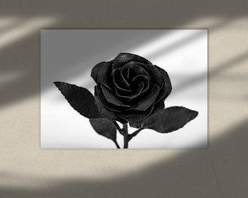 Rose Schwarz Weiß von Tessa Selleslaghs