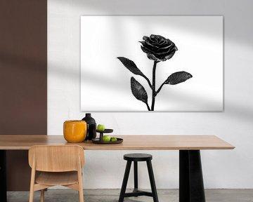 Rose Schwarz-Weiß-Studiofotografie von Tessa Selleslaghs