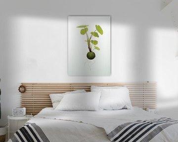 Hangende kokedama plant illustratie