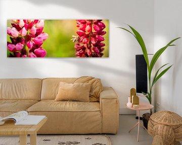 Blumen-Panorama von Jeroen Mikkers