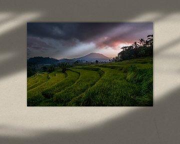 Rijstvelden bij Vulkaan Gunung Agung in Sidemen van Ellis Peeters