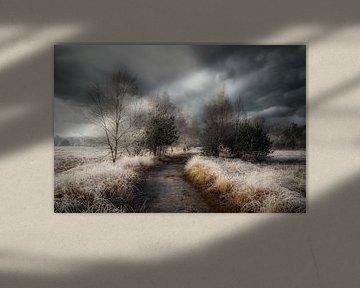 Een bevroren morgen in de natuur
