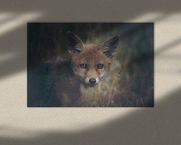 Portret van een jonge vos in de Nederlandse natuur in een dark moody setting