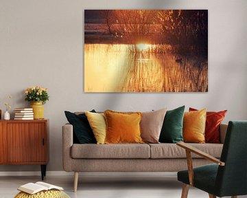 Le soleil du matin sur Gerard van der Wal