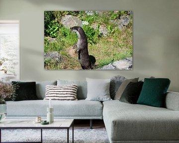 Otter von Mirjam Welleweerd