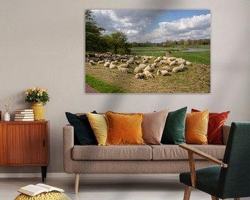 Schafe ruhen auf der Wiese von Marcel Rommens