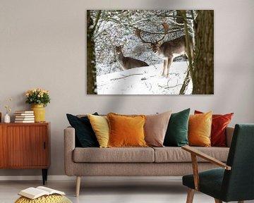 Damhirsche im Schnee von Merijn Loch