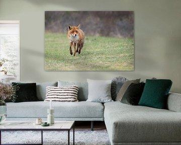 Fox von Merijn Loch