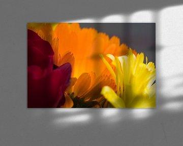 Rot-Orange-Gelb von J..M de Jong-Jansen