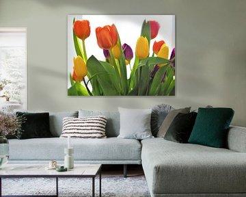 Tulpen von Christel Zûm Grotenhoff