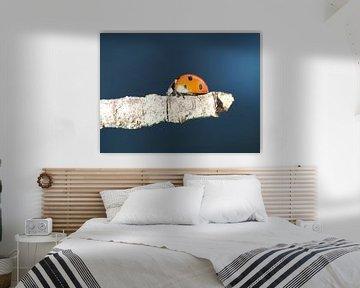 Lieveheersbeestje van Christel Zûm Grotenhoff