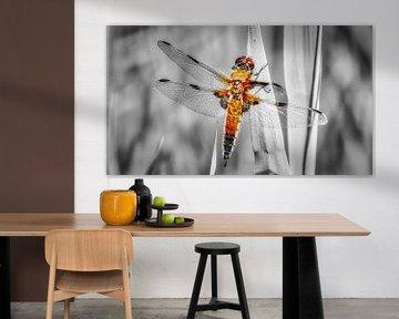 Libelle von Mart Houtman