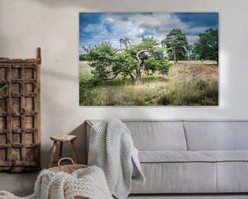Heidelandschap in Nederland met mooie wolken op de achtergrond. van Henk Van Nunen