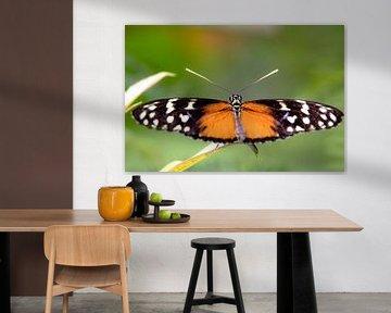Schmetterling von Anne Dellaert
