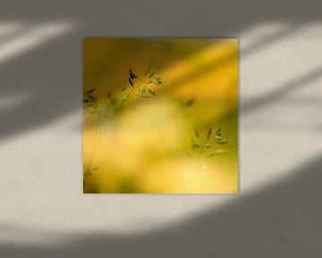 Gouden licht van Marian Merkelbach