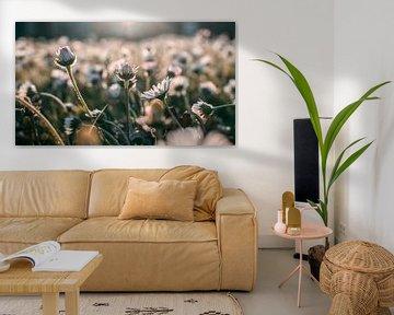 Blumenfeld von Amber Peeters