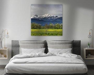 Groen veld met besneeuwde alpen van Patrik Lovrin