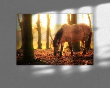 Auf der Jagd nach Pferden von Cho Tang