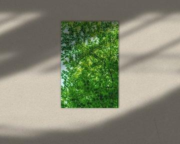 De groene long van Florian Kunde